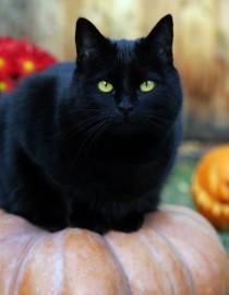 superstitie pisica- neagra