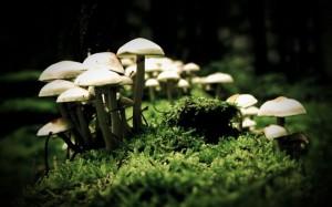 ciuperci-magice