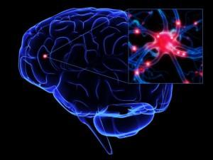plasticitatea-creierului