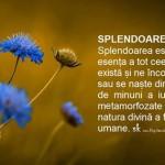 SPLENDOARE